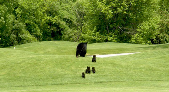 Black Bear – Franklin, NJ